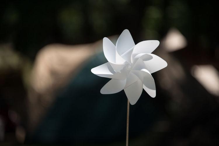 Pinwheel Summer Landscape White Pinwheel White Flower 白いかざぐるま 白い花 風景 風車