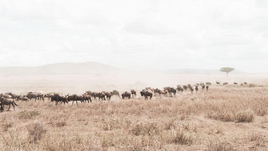 Mammals walking on land against sky