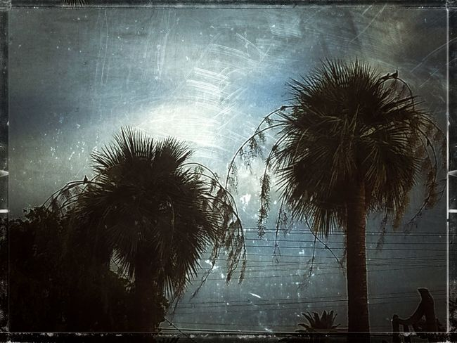 Architecture Auto Post Production Filter Beauty In Nature Cloud - Sky Coconut Palm Tree Day Growth Nature No People Outdoors Palm Tree Plant Silhouette Sky Transfer Print Tree Tree Trunk Tropical Climate Trunk Water