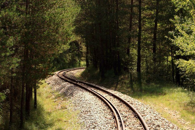 Train Nature Simple Moment Tren History