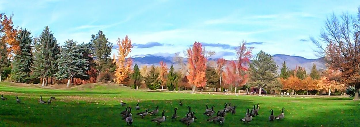 I just found this picture it was right as autumn ended quite pretty with the Ducks in the mountains and red leaves . this is a panoramic My Best Photo 2014Panorama Taking Photos Awesome!