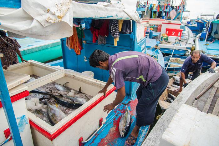 Big Tuna Boat Fish Fishing Boat Fishing Man Fresh Fish Fresh Fish Market Fresh Tuna Maldives Maldives Island Male Maldives Raw Food Seafood Tuna Fish