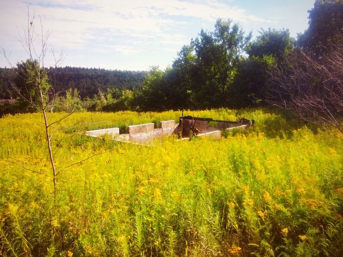 Golden Rods History Mystery Abandoned Places Memories Back To Nature Yellow Countryside Fire Summertime