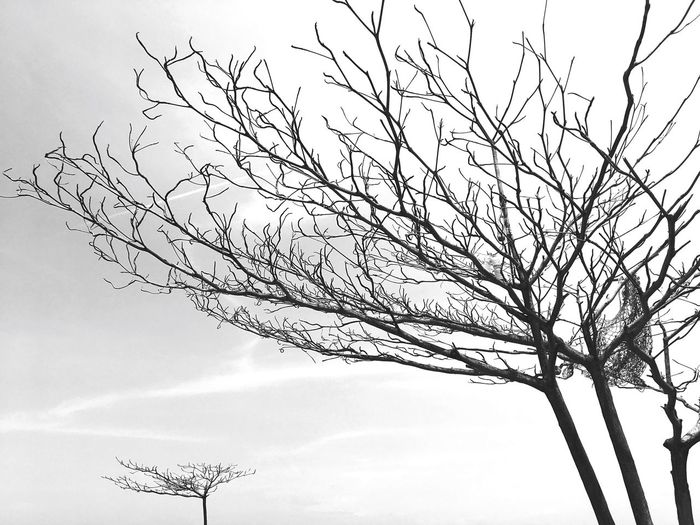 Treetastic TreePorn Tree Treestatic Treestagram Tree And Sky Monochromatic monochrome photography Monochrome The Still Life Photographer - 2018 EyeEm Awards The Creative - 2018 EyeEm Awards