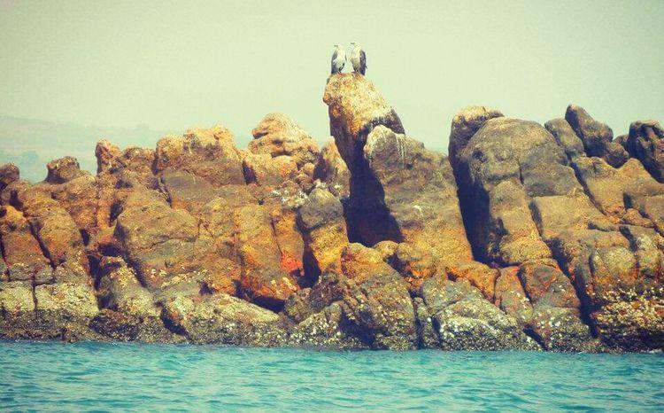 Blue Water Rocks Eagle - Bird Beauty In Nature