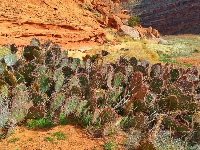 The Cactus Family Gathering ! Cactus Patch Muti Colored Hiking Hobby EyeEm Gallery Popular Photos Light And Shadow Sandstone Rock Formation Desert Photography Desert Landscape Desert Plants Sunlight