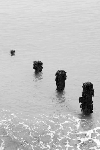 Four Posts Water Waterfront Tranquility Tranquil Scene Day Sea Motion Idyllic Wooden Post Seaweed Blackandwhite Black And White