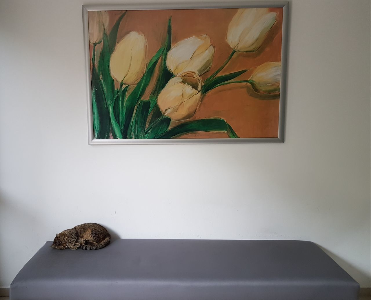 indoors, no people, animal themes, one animal, close-up, flower, animals in the wild, mammal, nature, day, freshness