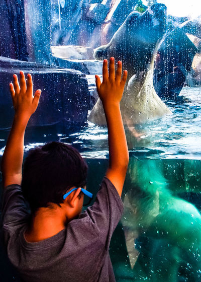 Rear view of boy looking at polar bear swimming in tank