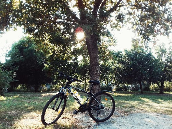 Bicycle against trees