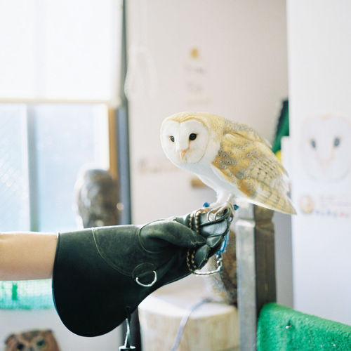 A tourist enjoys her time in a quirky owl cafe in Harajuku, Tokyo. Adventurous Harajuku Interesting Japan Owl Cafe Quirky Travel Unusual Adventure Animal Bird Bucket List Close-up Evening Focus On Foreground Human Body Part Human Hand Indoors  Owl Pop Culture Sunset Tourism Wacky 日本 東京