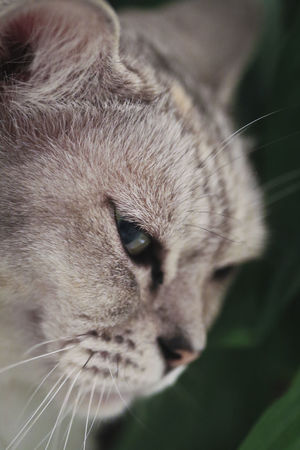 Cat Lovers Relaxing Fleur ♡ Cute Cats Contentment Hi! Macro Cat Kitty Check This Out Taking Photos Furry