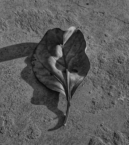 dried leaf Nature Bnw Blackandwhite Bnw_collection Leaves Leaves🌿 Leaf Nature Nature_collection Nature Photography Naturelovers