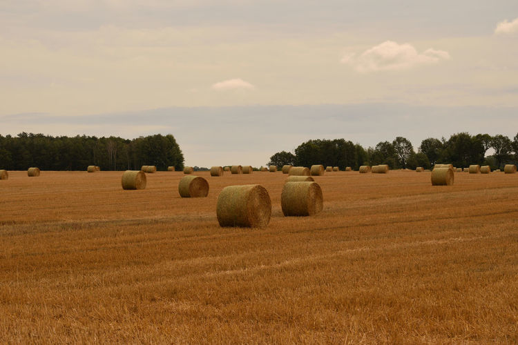 Straw bales on