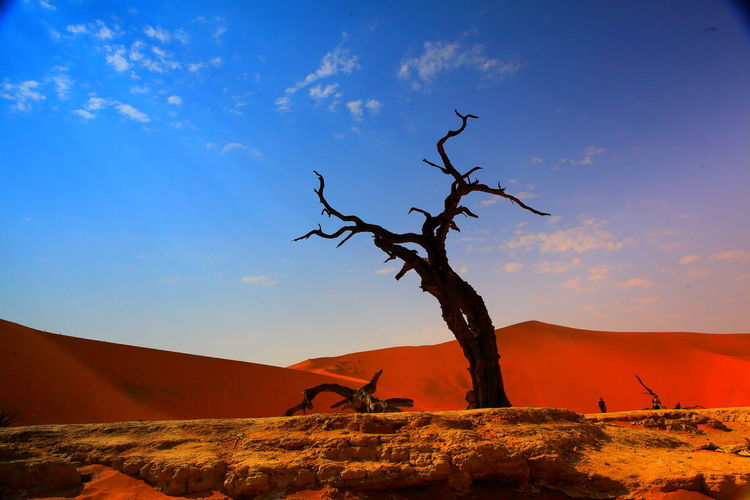 Deadvlei Sossusvlei Arid Climate Bare Tree Beauty In Nature Branch Day Dead Tree Desert Landscape Namib Nature No People Outdoors Sand Dune Scenics Sky Tranquil Scene Tranquility Tree Tree Trunk