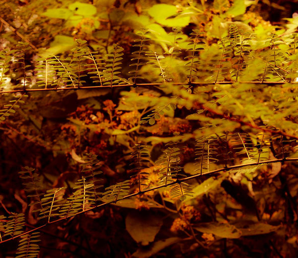 Leaf Day No People Full Frame Outdoors Backgrounds Nature Close-up Tree Malana Magic Valley Burned The Thoughts Freshness EyeEmNewHere Peace ✌ BirBilling Second Acts Rethink Things