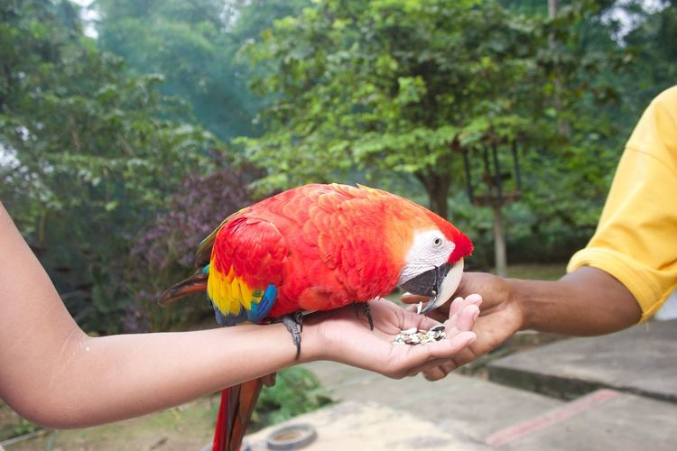 Cropped Hand Of Woman Feeding Macaw At Zoo