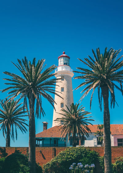 Palm trees by lighthouse against blue sky