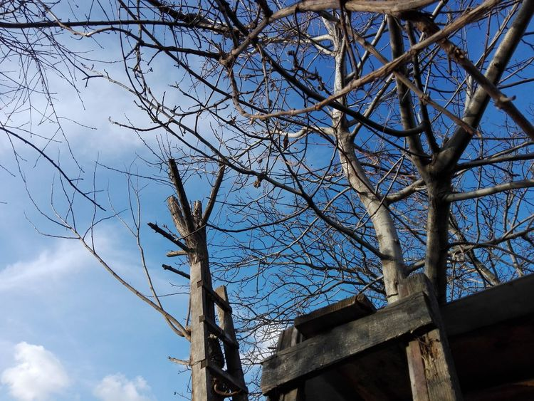Branches And Blue Sky Ladders Ladder Trees Tree WOLFZUACHiV Photography Veronica Ionita Wolfzuachiv VERONiCA Photography Veronica IONITA Photography Veronica WOLFZUACHiV Ionita Veronica Ionita Veronica Photography VERONiCA WOLFZUACHiV Photography Ionita Photography On Market Eyeem Market Huawei Photography Low Angle View Sky Tree Cloud - Sky Outdoors Day No People Branch Nature