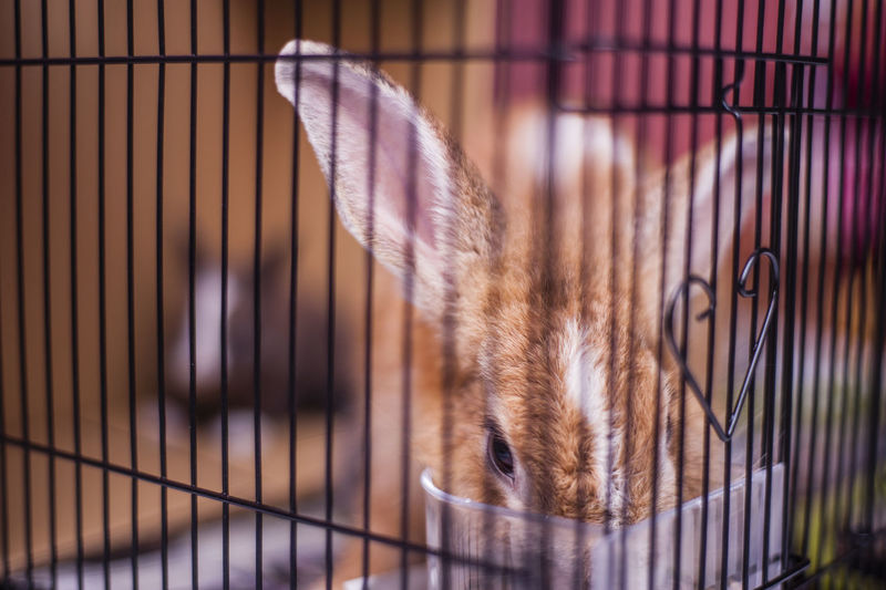 Alertness Animal Caged Close-up Hare In Captivity Looking At Camera Mammal Pets Rabbit