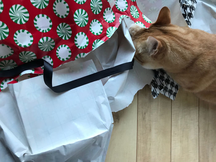 An orange tabby cat with wrapping paper on the floor with copy space