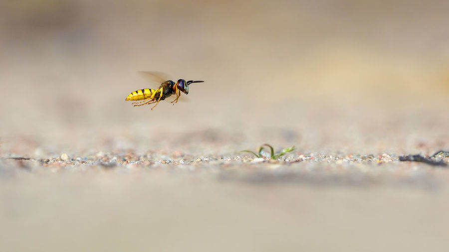 Close-up of flying insect