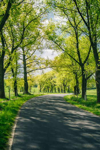 Empty spring road lane with trees Tree Plant Road The Way Forward Direction Nature Spring Green Color Tranquil Scene Street Outdoors Treelined Day Tranquility Sunlight