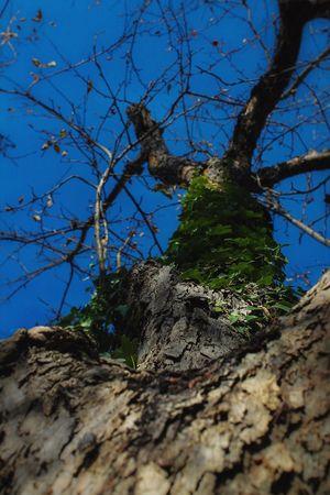EyeEm Best Shots EyeEmBestPics Ivy Tree Sky Blue Green