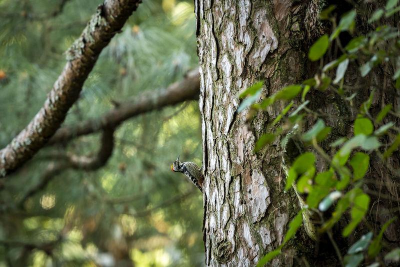 Close-up of a bird on tree