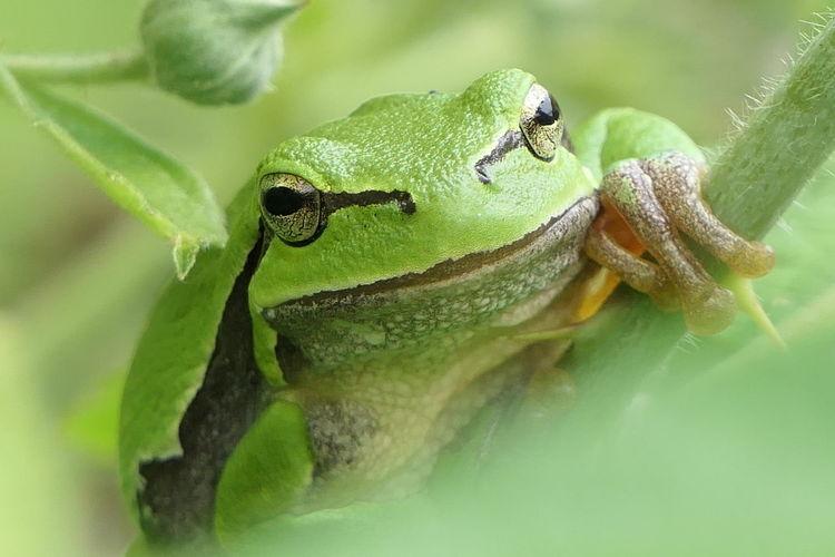 Legs Froglegs