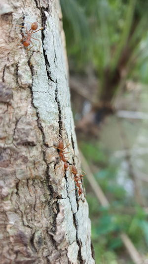 maybe they are searching for food..!🐜 Focused shot with blury background. Tree Trunk Tree Ants Animal Themes Forest Adventure Forest Photography Animal Photography Lost In Forest,.. 🌲🌲🌳🌴🌵