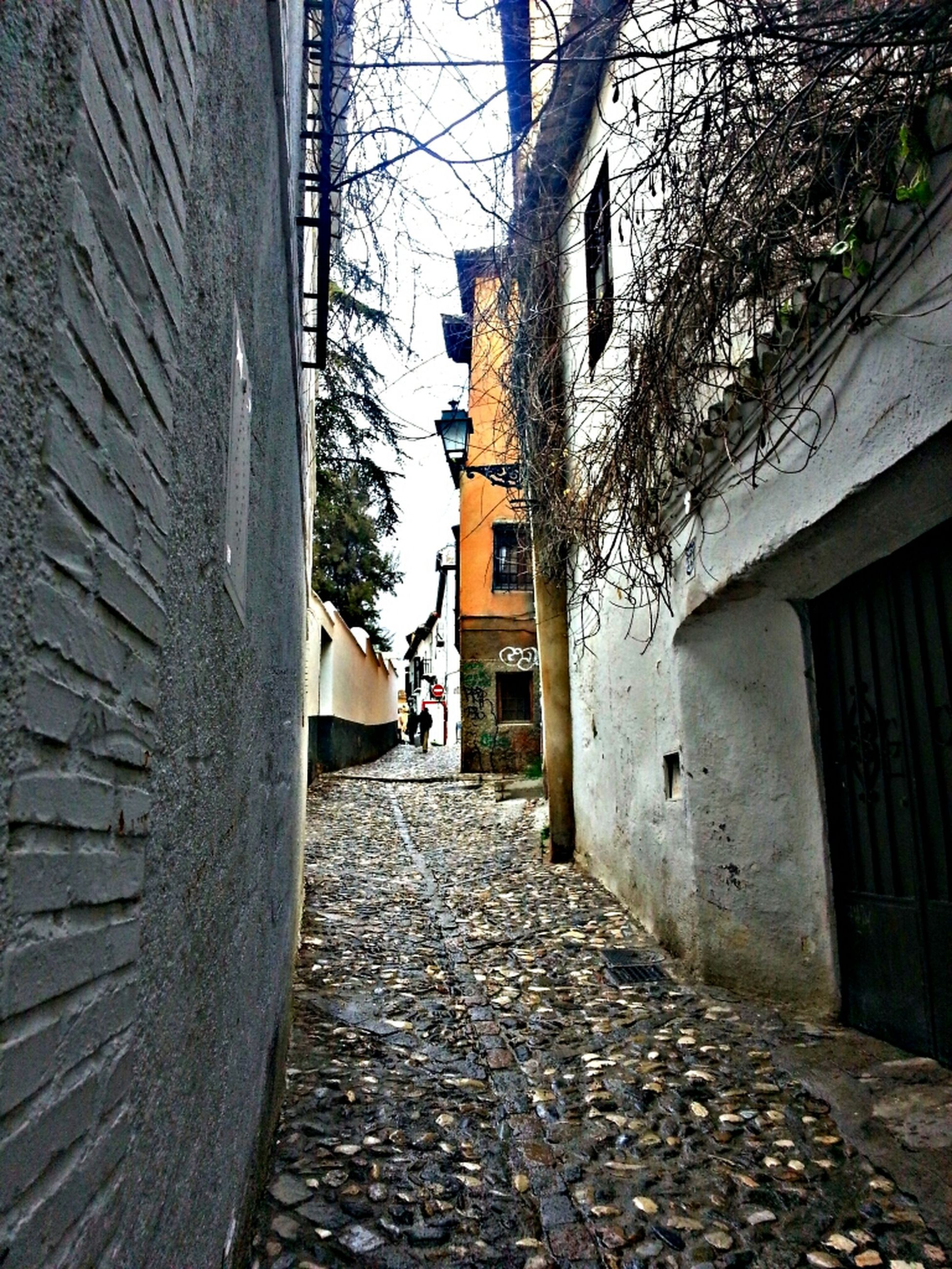 architecture, building exterior, built structure, the way forward, house, alley, residential structure, residential building, narrow, diminishing perspective, building, cobblestone, street, old, day, tree, vanishing point, pathway, outdoors, walkway