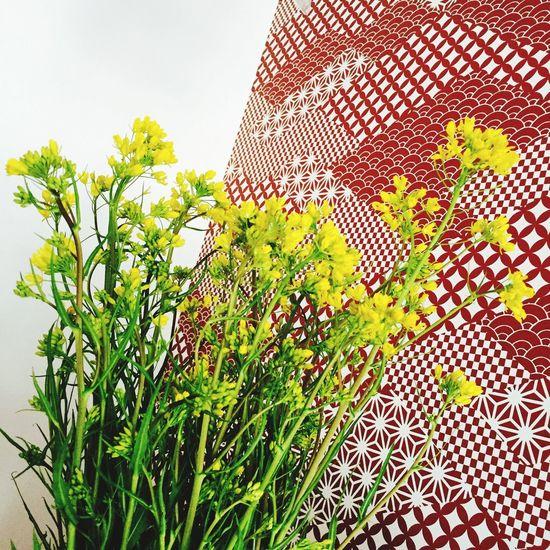 菜の花 Japan