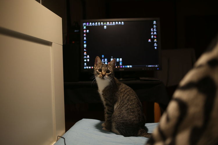 Cat sitting in a room