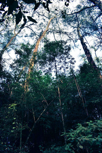Low angle view of bamboo trees in forest
