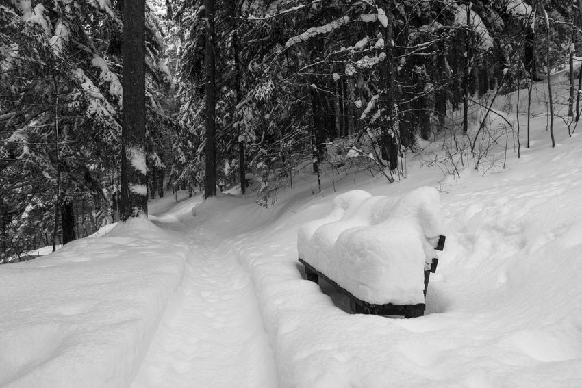 Bench Black And White Black Forest Bw Forest Nature Path Ski Touring Snow Snowfall Winter