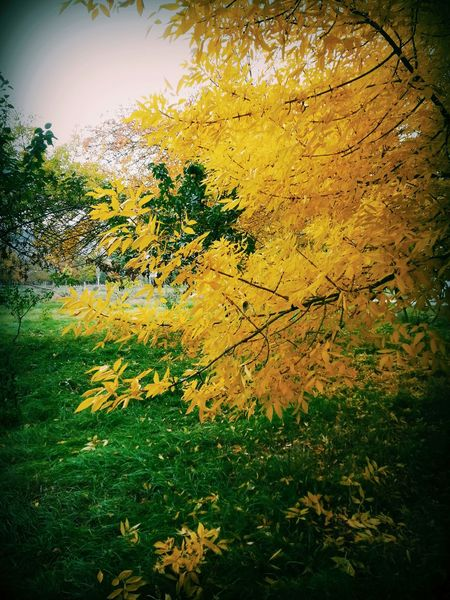 Colors EyeEm Nature Lover First Eyeem Photo Open Edit Green Autumn Yellow Leaves Natural Colours листья желтые