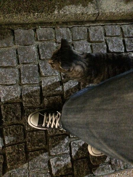 野良猫 Stray Cat 夜ねこ 走り猫