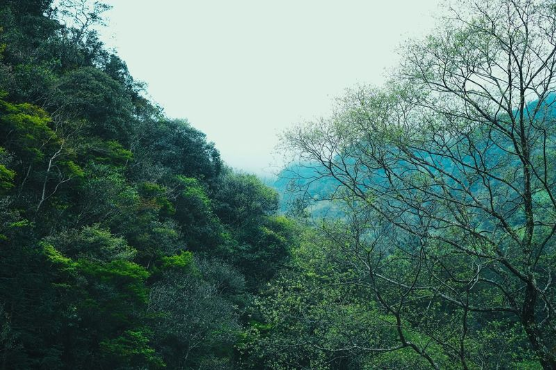 Tree Plant Nature Sky Low Angle View Growth No People Green Color Wet Foliage Lush Foliage Branch Outdoors Drop Plant Part Rain Beauty In Nature Water Window Day