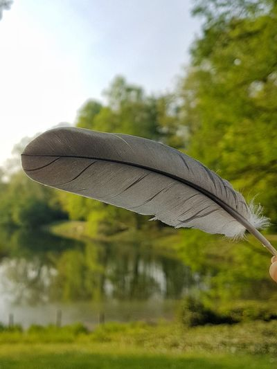 feather..... Fotografie Fotografia Feder Feather  Nature EyeNatureLover Water Sky