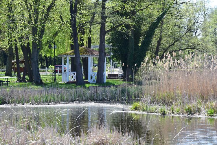 Schauen wir uns noch ein wenig um... Tree Plant Water Nature Growth Lake Day No People Green Color Tranquility Beauty In Nature Forest Architecture Built Structure Tranquil Scene Reflection Grass Waterfront Outdoors