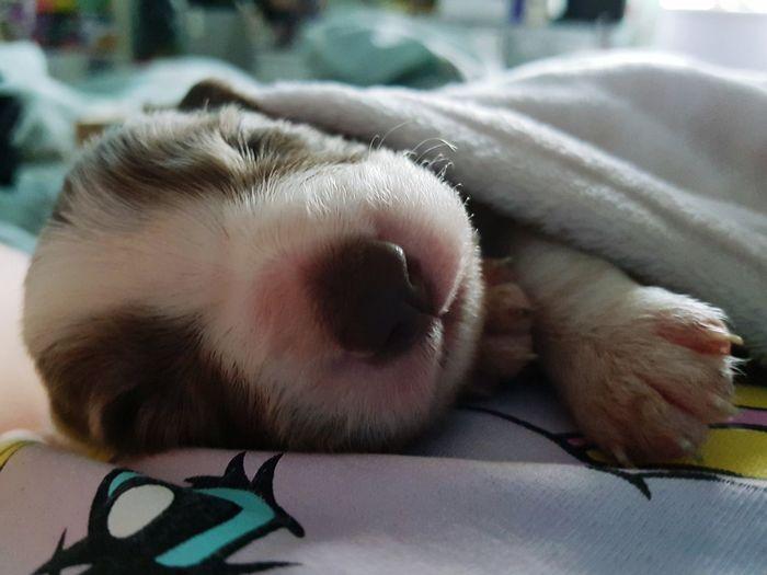 snug pup Puppy