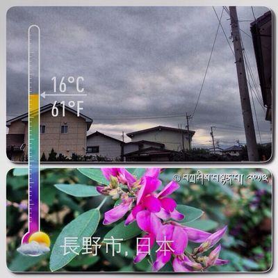 Pagi Ini ڤاڬي اين Bunga بوڠا