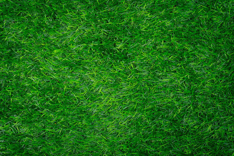 Full frame shot of grass. Green Color Full Frame Backgrounds Plant Grass Growth No People Nature Day Field Foliage Beauty In Nature Land Lush Foliage High Angle View Lawn Close-up Outdoors Directly Above Textured  Turf Gardening Grass Backgouun
