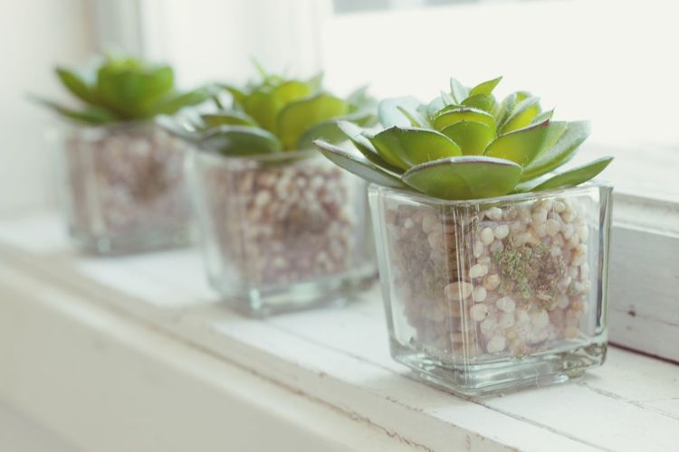 The power of three Three Of A Kind Three Window Sunlight Indoors  Plant Glass - Material Leaf Transparent No People Table Plant Part Nature Container Close-up Focus On Foreground Glass Freshness Still Life Jar Potted Plant
