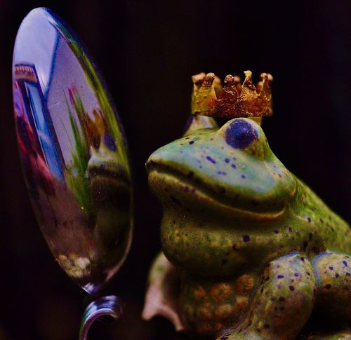 ....who's the fairest of them all ⁉️ Frog King Flowers,Plants & Garden