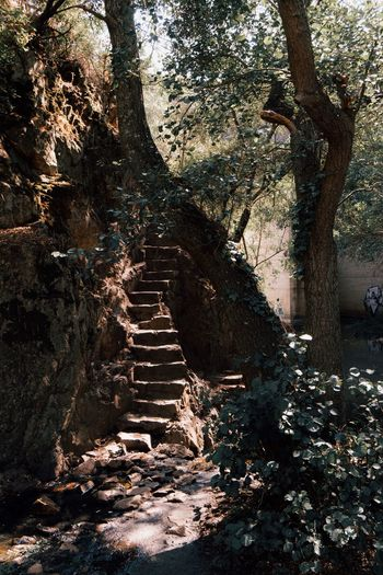 Tree growing by stone steps against building