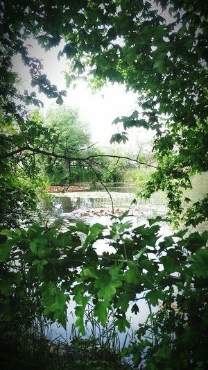 Natur Heimlicher Kleiner See Verstecktes Idyll Landschaftsaufnahme Im Grünen Natur