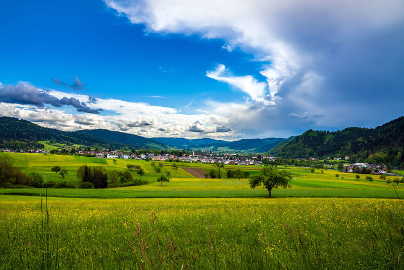 Schwarzwald Agriculture Beauty In Nature Black Forest Blue Cloud - Sky Day Farm Field Grass Green Color Growth Landscape Mountain Mountain Range Nature No People Outdoors Range Rural Scene Scenics Sky Tranquil Scene Tranquility Tree