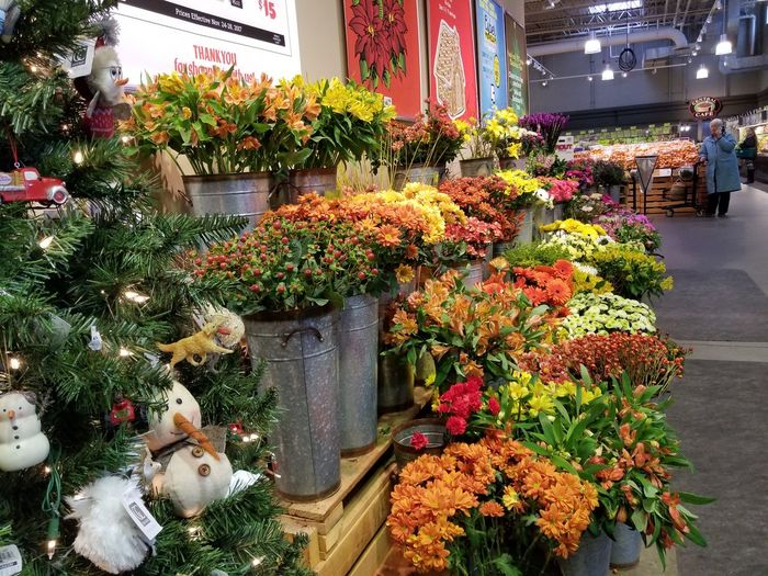 Retail  Plant Growth Tree Outdoors Flower Day Nature Beauty In Nature Freshness